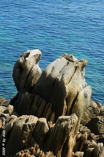 Forme, Volti e Colori dell'Isola di Ercole - Asinara (774 clic)