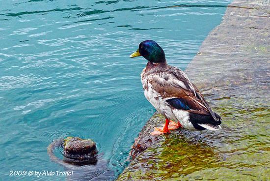 010/15 - Una Cartolina da Portofino (3215 clic)