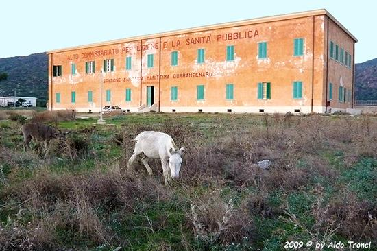 Forme, Volti e Colori dell'Isola di Ercole - Asinara (1075 clic)