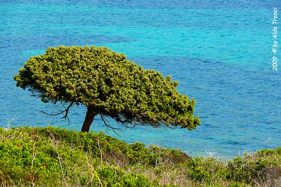 Forme, Volti e Colori dell'Isola di Ercole - Asinara (1074 clic)