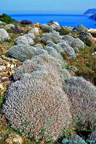 Forme, Volti e Colori dell'Isola di Ercole - Asinara (769 clic)