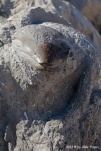 005/31 - Caorle: Sculture su pietra (544 clic)