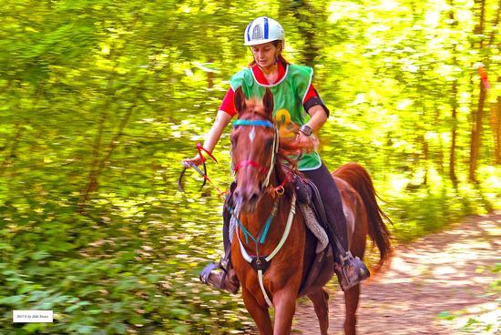 Endurance '2017 - San vito al tagliamento (338 clic)