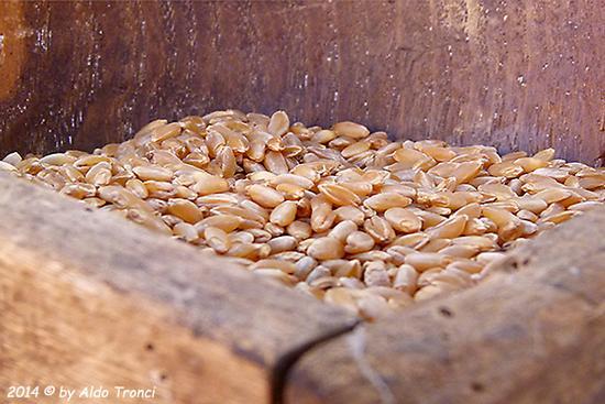 003/40 - Samugheo: Festa de Su Tzichi (863 clic)