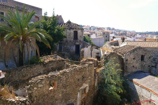 035. OLIENA '2011 - Cortes Apertas (1511 clic)