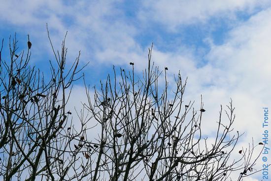 013/13. Autunno nel mio giardino - VALVASONE - inserita il 28-Nov-12