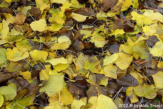 003/13. Autunno nel mio giardino - Valvasone (1276 clic)
