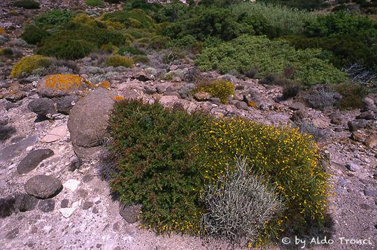 011. Lungo la scogliera  - Calasetta (2159 clic)