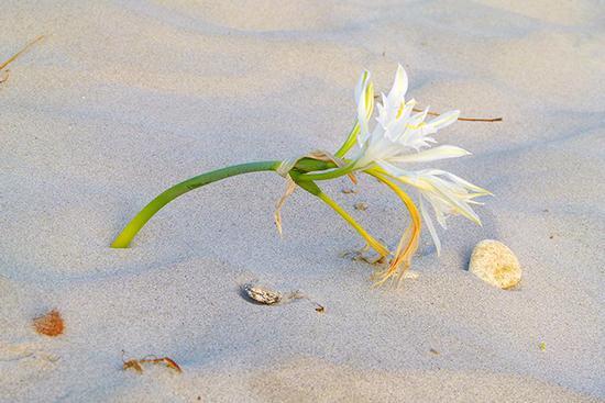 012/13. Spiaggia Lu Impostu - San teodoro (999 clic)