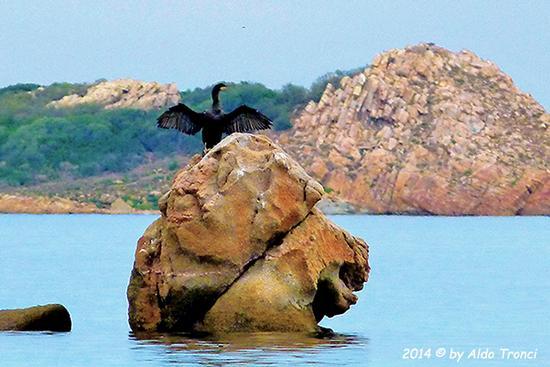 006/13. Spiaggia Lu Impostu - San teodoro (523 clic)