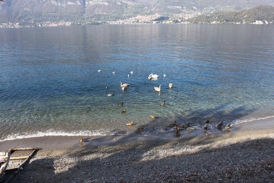 Vita sul lago - Lezzeno (1497 clic)