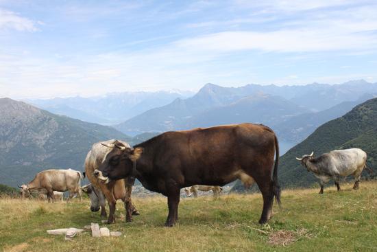 dall'alto del monte Galbiga - Lezzeno (1603 clic)