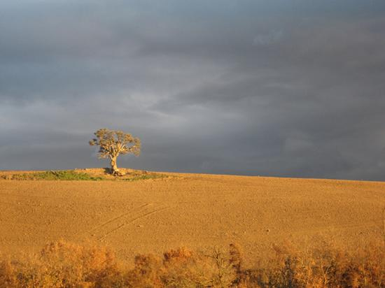 albero di sughero Loc. San Pantaleo - tuscania (3305 clic)