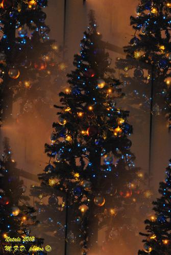the christmas tree - Noci (2101 clic)