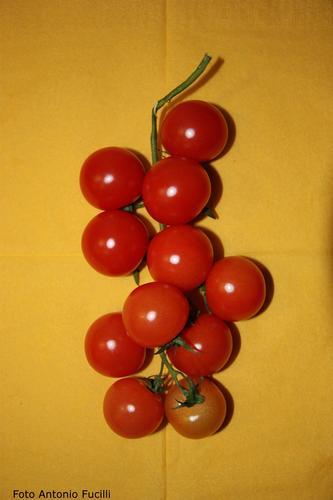 pomodori - Ruvo di puglia (1519 clic)