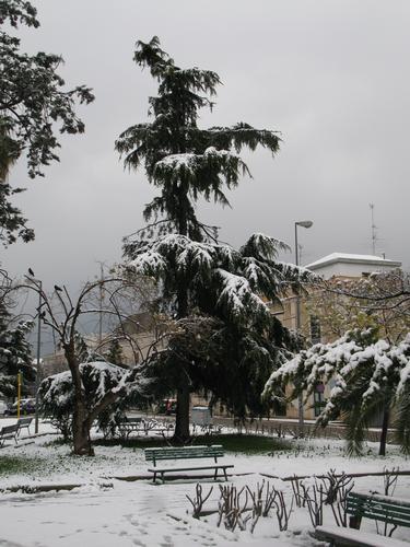 nevicata - Ruvo di puglia (1408 clic)