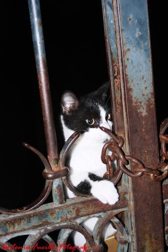tino il gattino malandrino - Ruvo di puglia (1690 clic)
