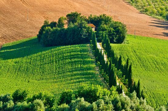 Campagna Marchigiana - Macerata (3333 clic)
