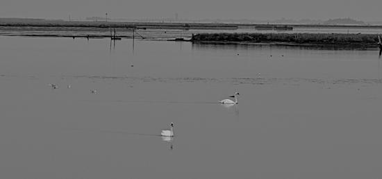 Bianchi in laguna (523 clic)