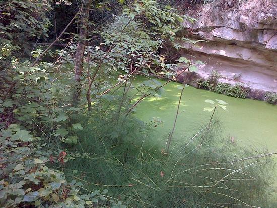 Lo stagno - San giacomo bellocozzo (1169 clic)