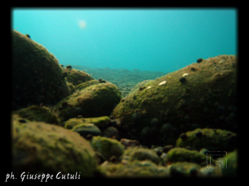Sottacqua - Fiumefreddo di sicilia (2841 clic)