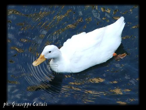 Ortigia - Siracusa (2132 clic)