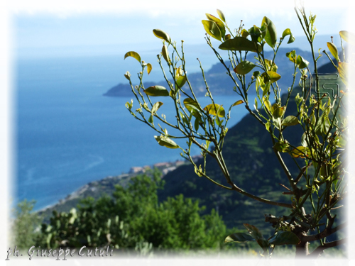 Mar Ionio - Forza d'agrò (2982 clic)