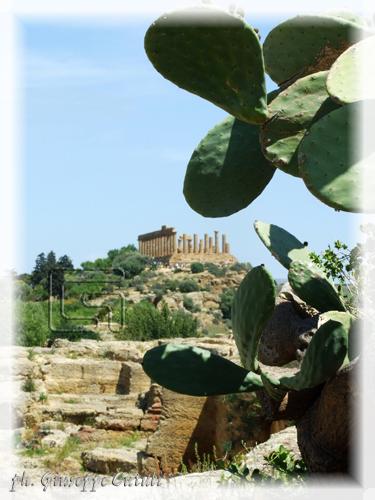 Tempio di Giunone - Agrigento (1891 clic)