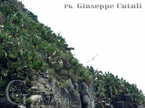 Gabbiani - Aci trezza (2619 clic)