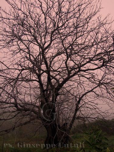 Natura - Viagrande (3050 clic)