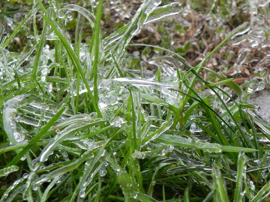 cristalli d'erba - Breda di piave (2054 clic)