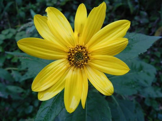 yellow flower - Sagrado (1981 clic)