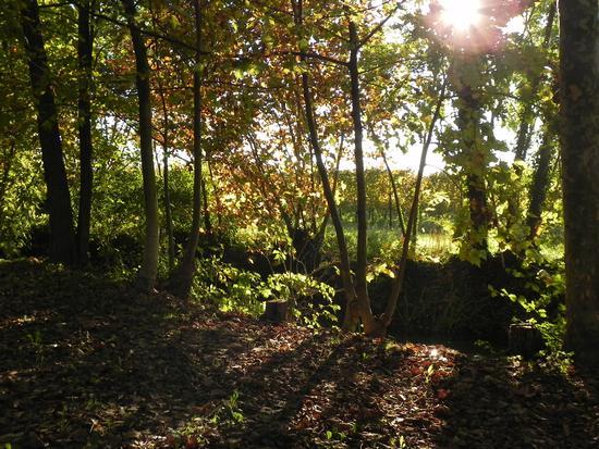 boschetto in autunno - Breda di piave (2002 clic)