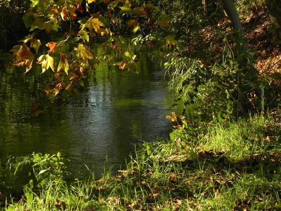 ruscello nel bosco - Breda di piave (4499 clic)