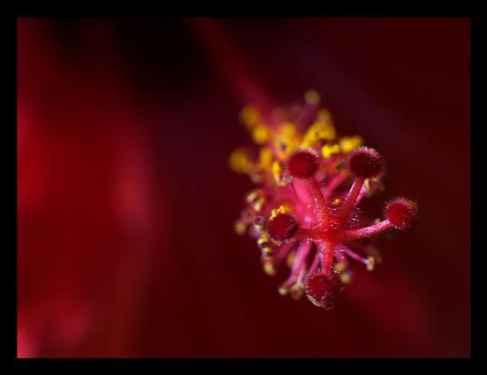 Red passions - Scoglitti (2888 clic)