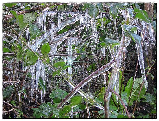 Natura gelata - Gioiosa marea (2593 clic)