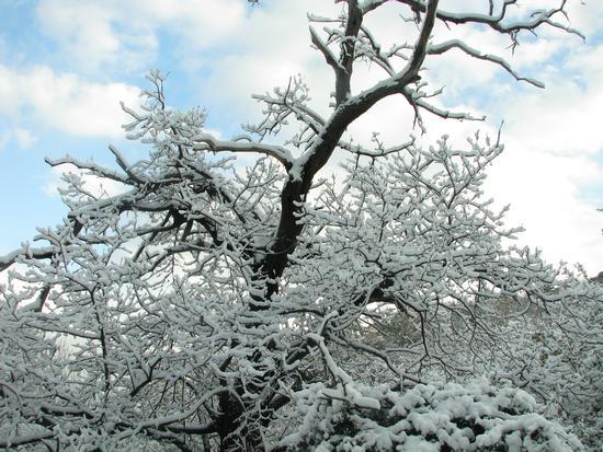 Castagno d'Inverno - Gioiosa marea (2902 clic)