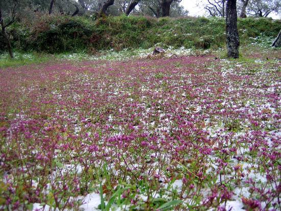 Neve a Primavera - Gioiosa marea (2503 clic)