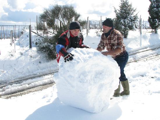 Palla di neve - Gioiosa marea (2928 clic)