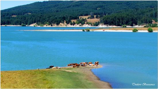 I colori della Sila. Lago Cecita - SILA - inserita il 23-Sep-11