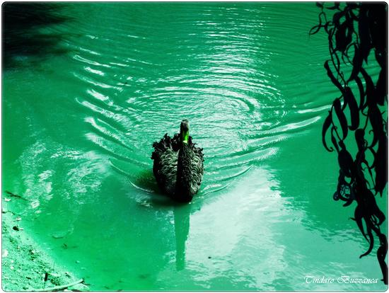 Lago Pergusa (2574 clic)