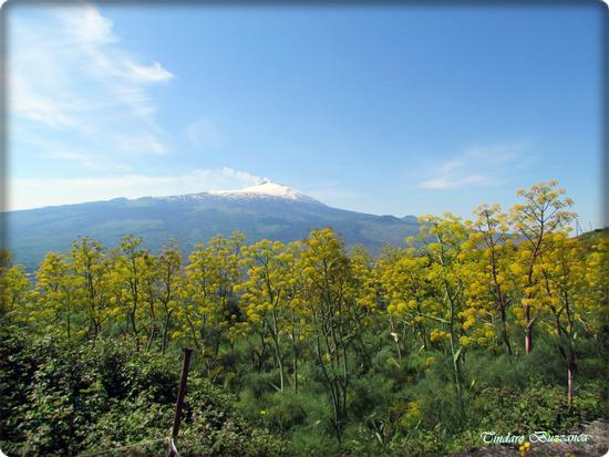 L'Etna a primavera - Santa domenica vittoria (2454 clic)