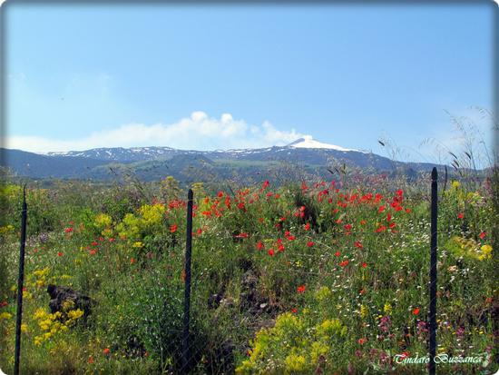 L'Etna a primavera - Randazzo (2204 clic)