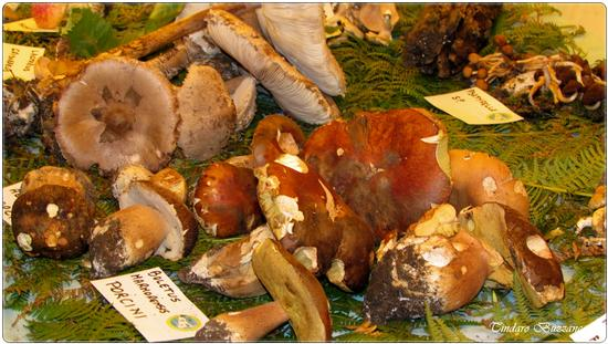 Mostra funghi - Caronia (2114 clic)