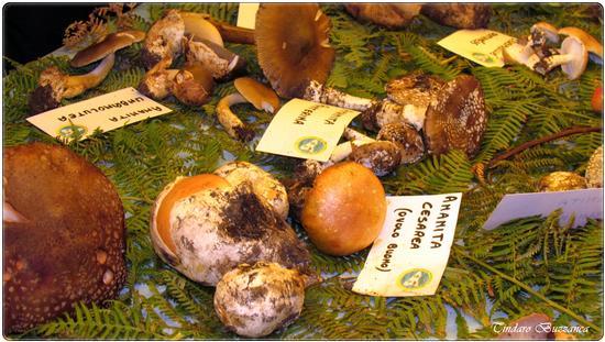 Mostra funghi - Caronia (2292 clic)