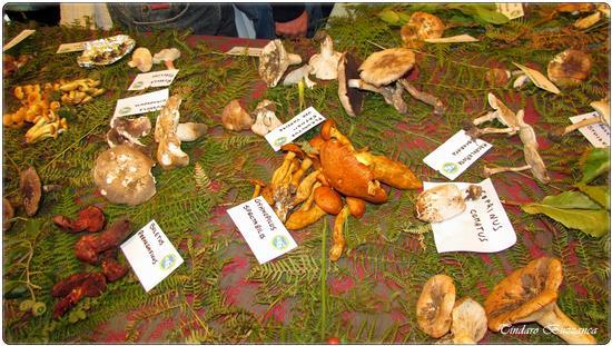 Mostra funghi - Caronia (2086 clic)