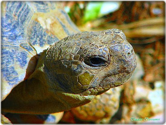 Tartaruga - Gioiosa marea (2192 clic)