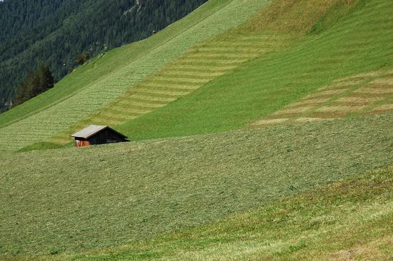 Verdi prati - Alpi aurine (2155 clic)