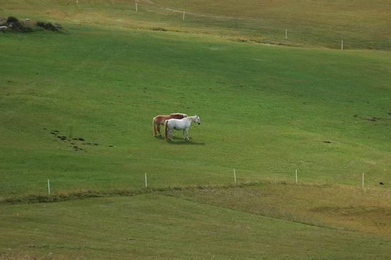 Equini - Alpe di siusi (2275 clic)