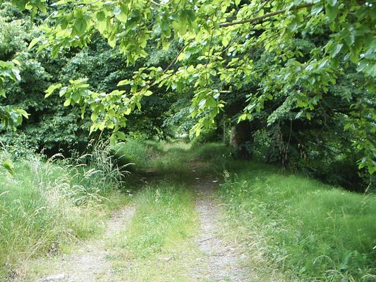 La strada nel bosco - Montegrotto terme (1313 clic)